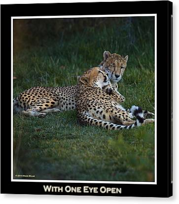 Pittsburgh Zoo Canvas Print - I've Got My Eye On You by Mark Milar