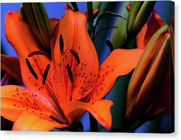 I've Got My Orange Crush Canvas Print by Mother Nature