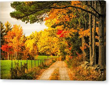 Canvas Print featuring the photograph I've Got Sunshine On A Cloudy Day by Robert Clifford