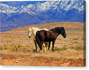 I've Got Your Back Canvas Print by Greg Norrell