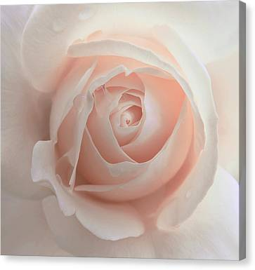 Ivory Peach Pastel Rose Flower Canvas Print by Jennie Marie Schell