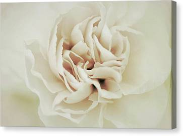 Ivory Perfection Canvas Print