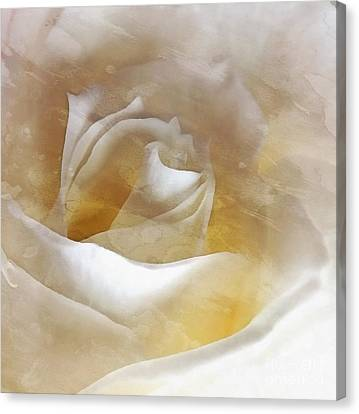 Ivory Rose - An Affair To Remember   Canvas Print by Janine Riley