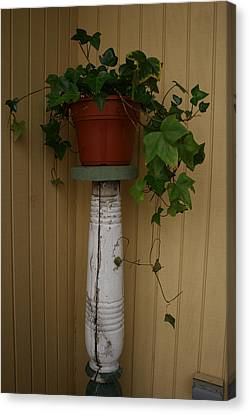 Ivy Corner Canvas Print by Alan Rutherford