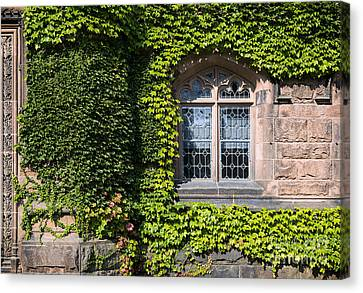 Ivy League Canvas Print by John Greim