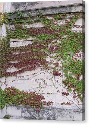 Ivy Wall I Canvas Print