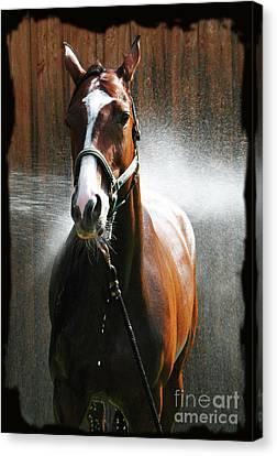 Canvas Print featuring the photograph Ivys Shower by Deborah Johnson