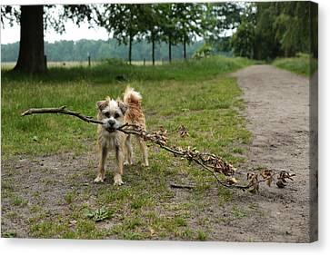 Dutch Dog With A Branch Canvas Print by Rona Black