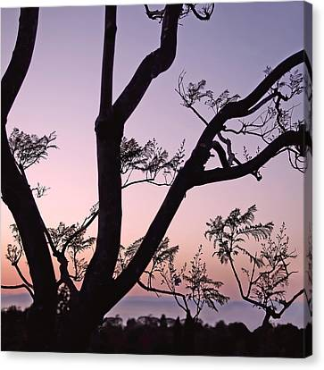 Jacaranda Silhouette Canvas Print by Rona Black