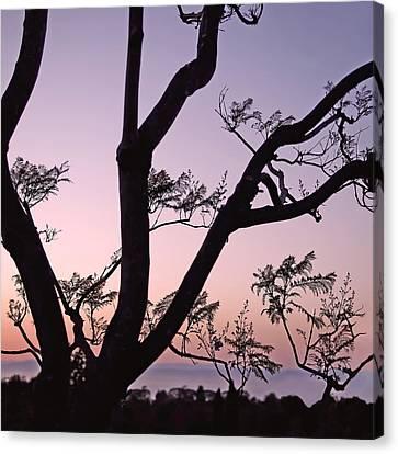 Jacaranda Silhouette Canvas Print