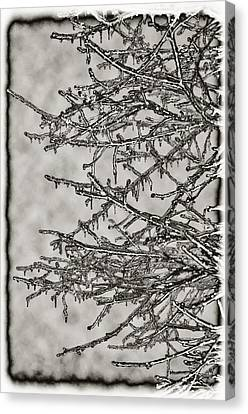 Jack Frost Canvas Print by Bill Cannon