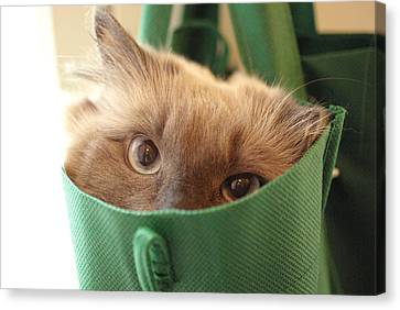 Jack In The Bag Canvas Print