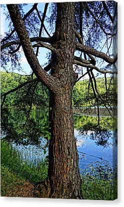 Jack Pine Overlooking Plum Orchard Lake Canvas Print