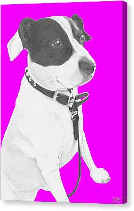 Jack Russell Cross With Pink Background Canvas Print