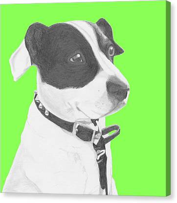 Jack Russell Crossbreed In Green Headshot Canvas Print by David Smith