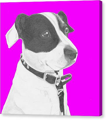 Jack Russell Crossbreed In Pink Headshot Canvas Print by David Smith