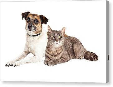 Mutt Canvas Print - Jack Russell Terrier Dog And Tabby Cat by Susan Schmitz