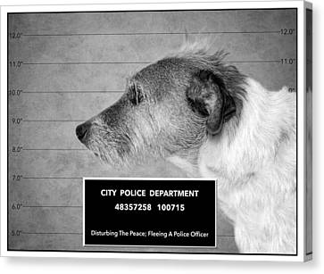 Jack Russell Terrier Mugshot - Dog Art - Black And White Canvas Print by SharaLee Art