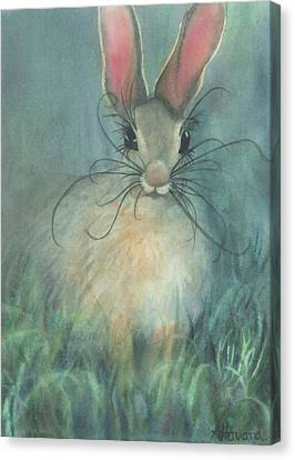 Jack-the-rabbit Canvas Print by Anne Havard