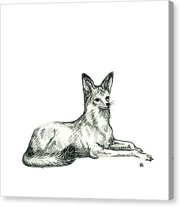 Jackal Sketch Canvas Print