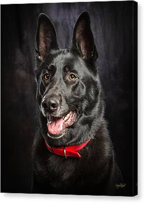 German Shepherd Canvas Print - Jackaroe by Everet Regal