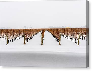 Jackson-triggs Winery Niagara Estates Canvas Print