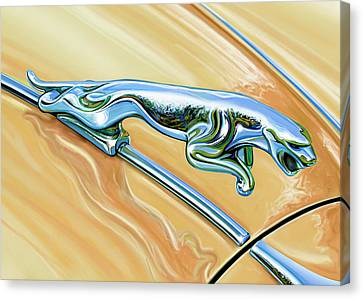 Jaguar Hood Cat Canvas Print by David Kyte