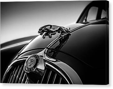 Jaguar Mascot Canvas Print by Douglas Pittman