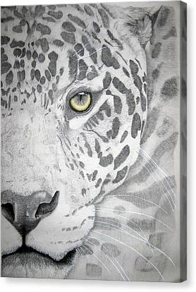 Canvas Print featuring the drawing Jaguar by Mayhem Mediums