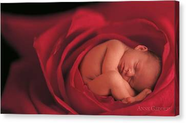 Jake In Rose Canvas Print by Anne Geddes