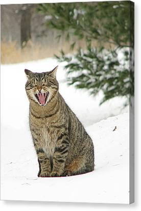 Jake In The Snow Canvas Print by Laurie With