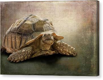 Jamal The Tortoise Canvas Print by Angela A Stanton