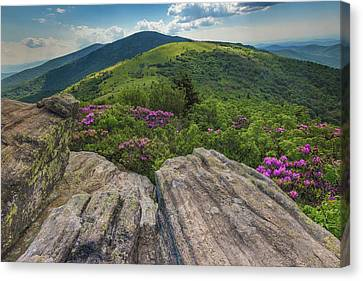 Jane Bald Rhododendrons Canvas Print