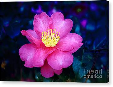 Jane's Sasanqua Canvas Print by Marilyn Carlyle Greiner