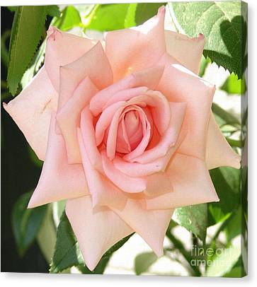 Janet's Pink Rose Canvas Print