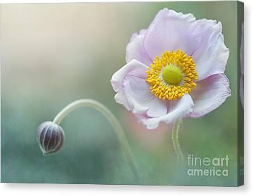 Japanese Anemone Canvas Print by Jacky Parker