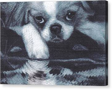 Japanese Chin Deep Thoughs Canvas Print by Joshua Hullender