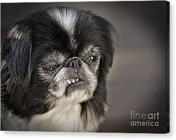 Puppy Canvas Print - Japanese Chin Doggie Portrait by Jim Fitzpatrick