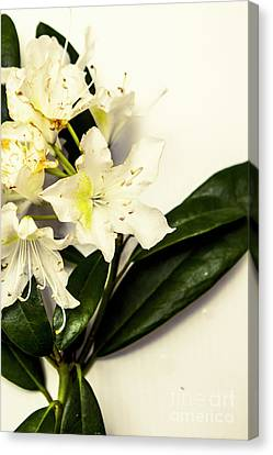 Japanese Flower Art Canvas Print by Jorgo Photography - Wall Art Gallery