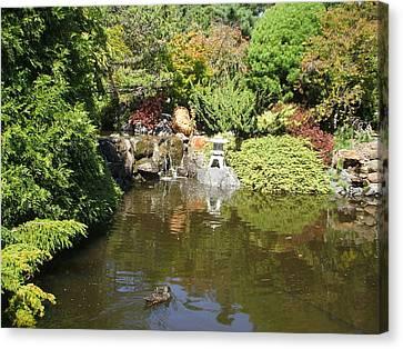Japanese Garden At The Botanical Gardens In Hobart Tasmanis Canvas Print by Bethwyn Mills
