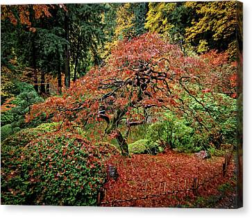 Canvas Print featuring the photograph Japanese Maple At The Japanese Gardens Portland by Thom Zehrfeld
