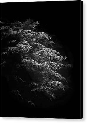 Japanese Maple Canvas Print by Joseph Smith