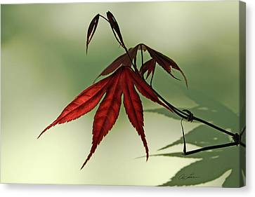 Canvas Print featuring the photograph Japanese Maple Leaf by Ann Lauwers