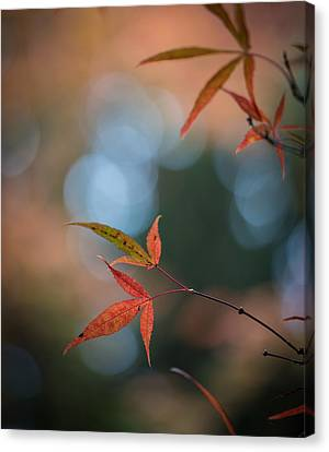 Japanese Maple Leaves Meditation Canvas Print by Mike Reid