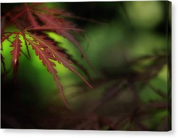 Canvas Print featuring the photograph Japanese Maple by Mike Eingle