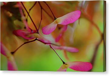 Japanese Maple Seedlings Canvas Print