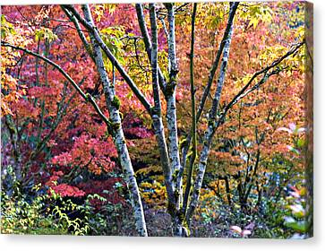 Japanese Maples In Full Color Canvas Print