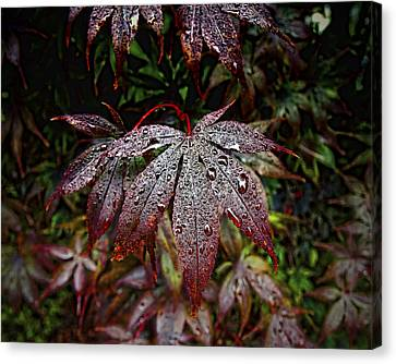 Japanese Maples In The Rain Canvas Print by Michael Putnam