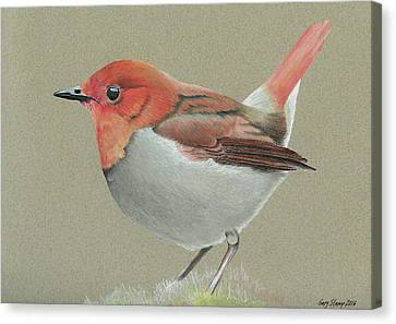 Canvas Print featuring the drawing Japanese Robin by Gary Stamp