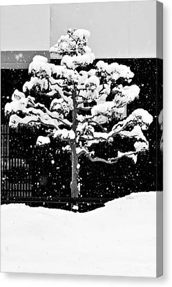 Japanese Tree In The Snow Canvas Print by Dean Harte